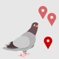 Google Update Pigeon ändert die Suchergebnisse bei lokaler Suche